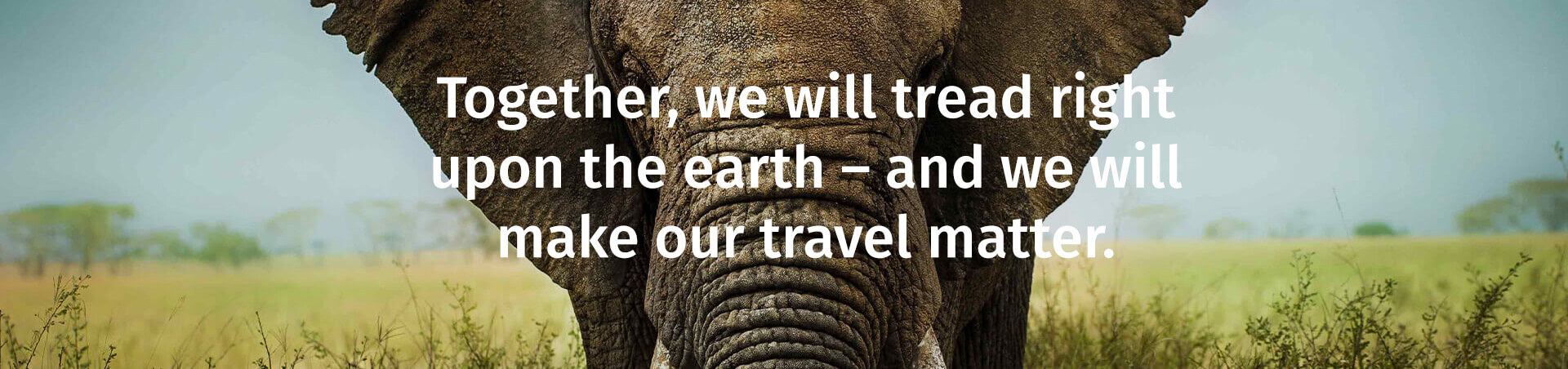 Make Travel Matter - Elephant Closeup